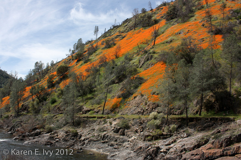 Poppies along highway 140