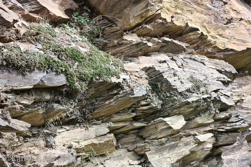 Rock plants, Railroad Flat