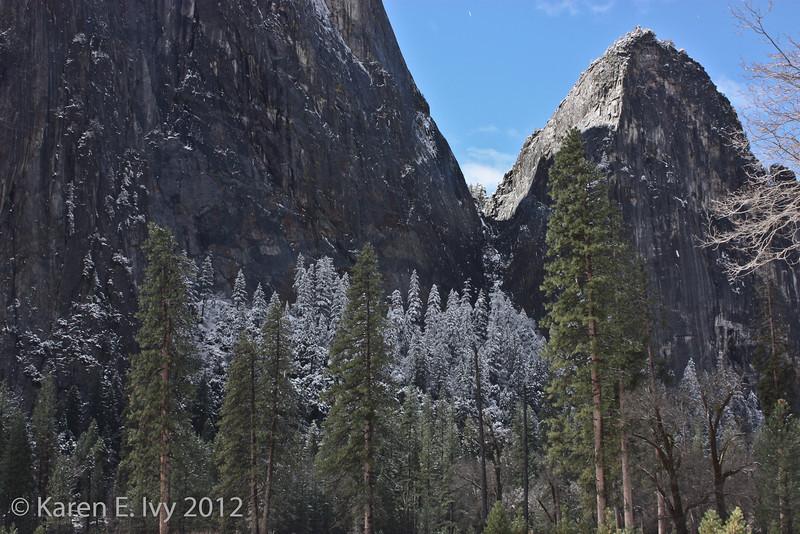 Snowy trees, Yosemite