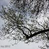 Tree in Enoch Christofferson rest stop, highway 99