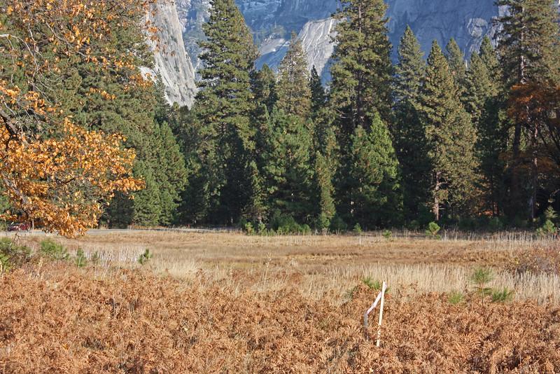 Yosemite valley floor