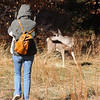 I'm not the only one photographing the deer