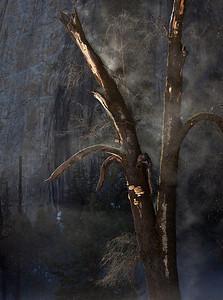 Split tree and mist