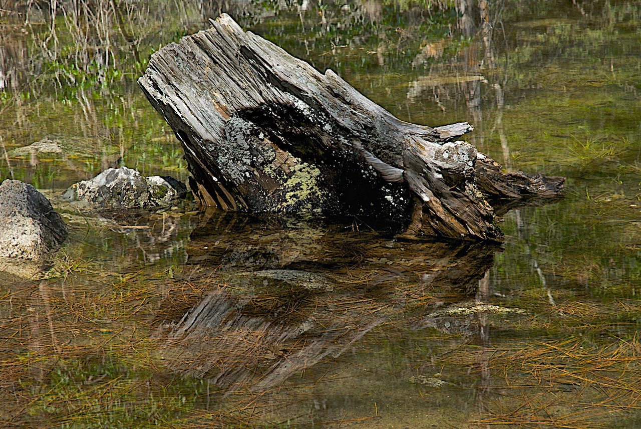 Lost Log Mirror Lake