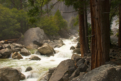 Redwoods at Merced River
