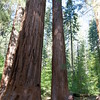 The main sequoia grove in Yosemite was closed, so we only got to see a handful of trees. Guess we should check out Sequoia National Park if that's what we really want to see...