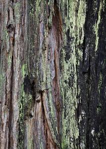 Bark pattern, courtyard of Yosemite Lodge