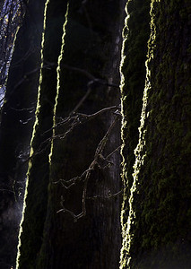 Moss pattern with branch, El Capitan Meadow