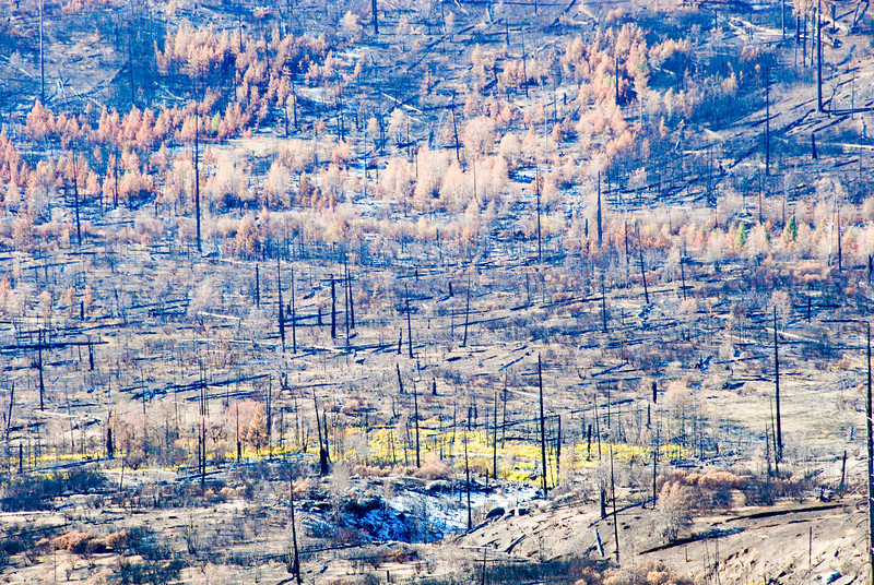 """<span id=""""title"""">Burn Area</span> Outside of the National Park, this area had burned earlier in the year."""