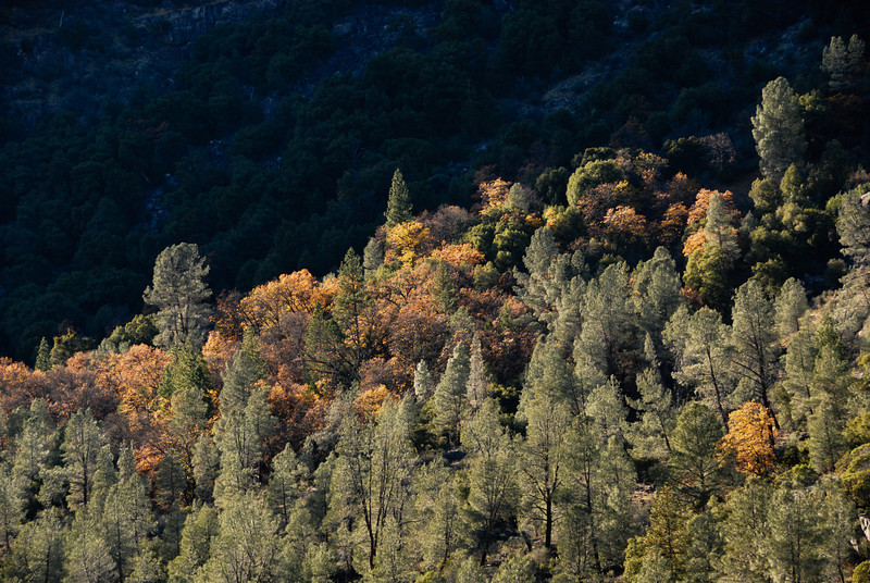 """<span id=""""title"""">Lil' Bit 'o Color</span> This was the most Fall color we saw - of course it was late November."""