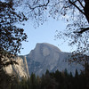 "<span id=""title"">Half Dome</span> Framed between trees near Yosemite Falls."