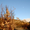 """<span id=""""title"""">Burn Area</span> A burned manzanita bush with burned trees in the background. This was right before sunset, so the light was very golden, in addition to the color of the burned vegetation."""