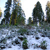 """<span id=""""title"""">Snow</span> In the morning, most of the trees in this area were covered in snow from the night before, but by the afternoon it only remained on plants that were low to the ground and in full shadow."""