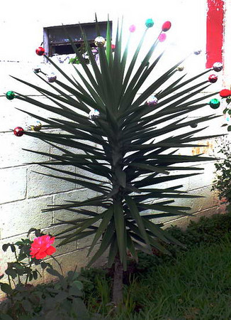 Christmas Tree, tropical style