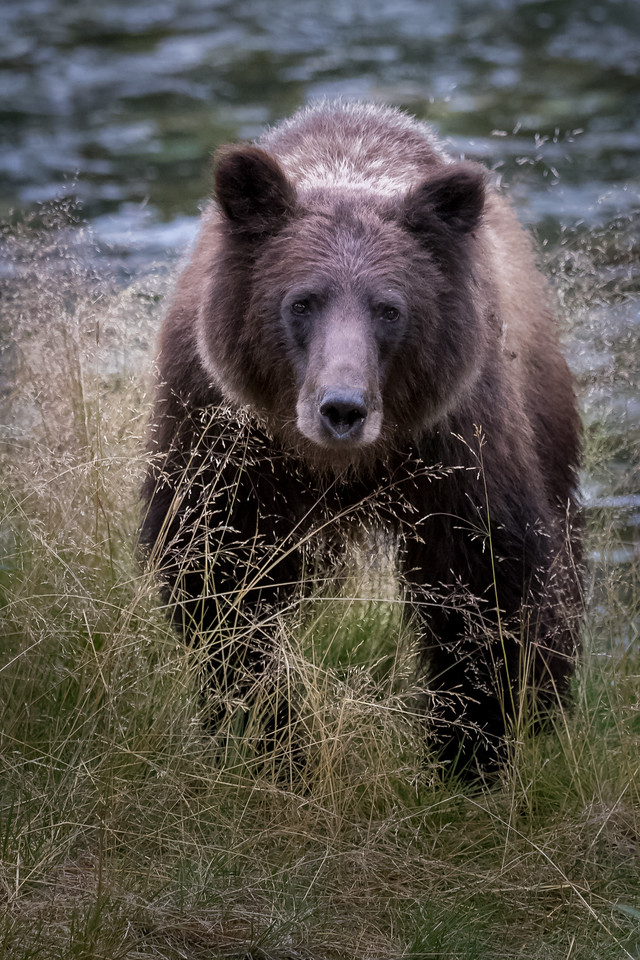 bear%20close%20up%20-2694-X2.jpg
