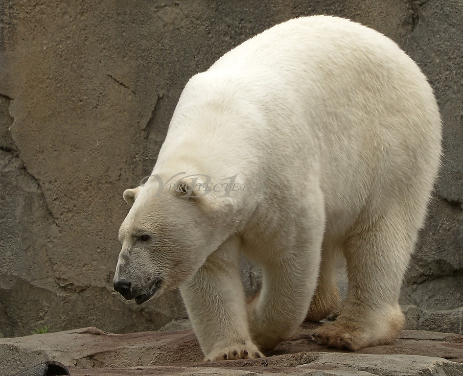 ZOO CHICAGO (143)A