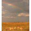 Après la pluie, l'arc-en-ciel.<br /> <br /> After the rain, the rainbow