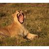 Baillement-Yawn