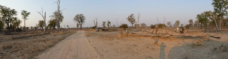 Mopane Forest