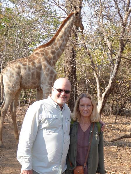 Giraffe at Royal Livingstone Hotel