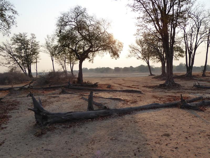 South Luangwa Landscape