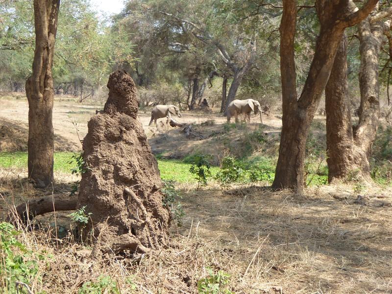 Termite Mound and Elephants
