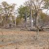 Zambian Landscape