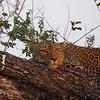 Leopard, Finally!