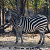 Zambia_Game_Drive_20