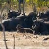 Zambia_Game_Drive_02