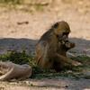 Zambia_Game_Drive_13