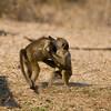 Zambia_Game_Drive_09