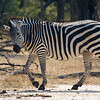 Zambia_Game_Drive_19