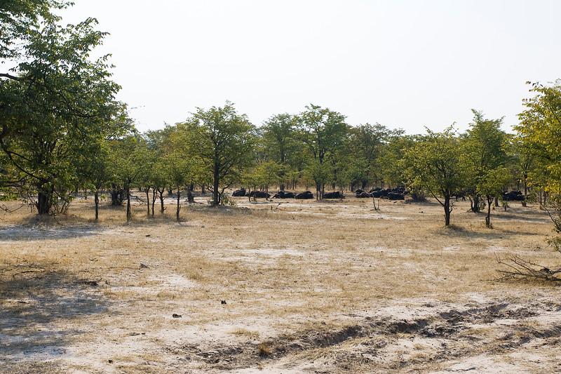 Zambia_Game_Drive_01