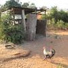 Zambia_Simonga_Village_17