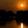 Zambia_Sindabezi_Island_19