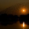 Zambia_Sindabezi_Island_18