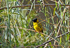 Another village weaver at Southern Sun Ridgeway Hotel.