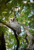 Eagle owl. Found during a walking safari with Phil Berry out of Kuyenda Bush Camp.