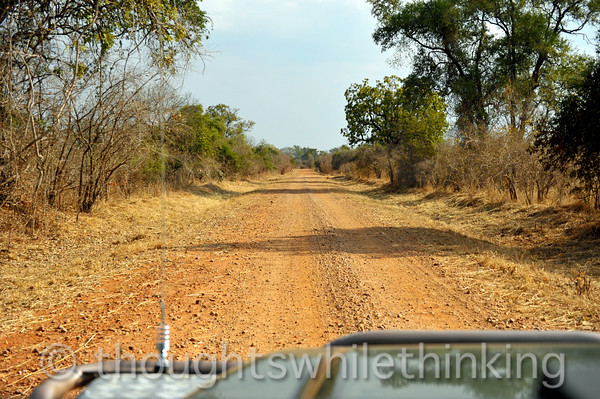Afternoon game drive in an open Land Rover from Kuyenda Bush Camp. This is one of the best roads in the area.
