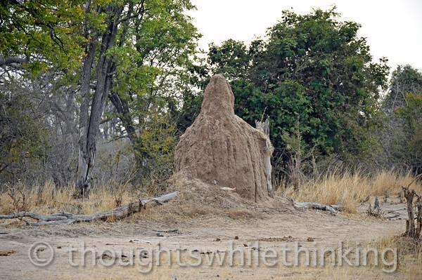 Termite mound.