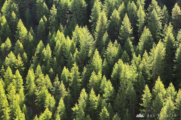 Backlit trees.
