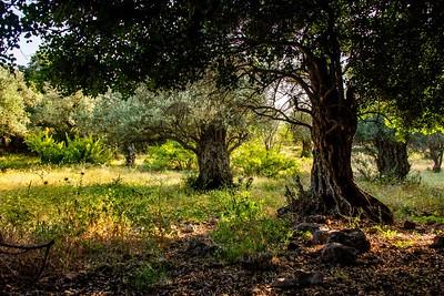 Ziknei Tzion Hermon  Hazuri