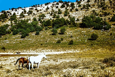 Ziknei Tzion Hermon  Nahal Arar