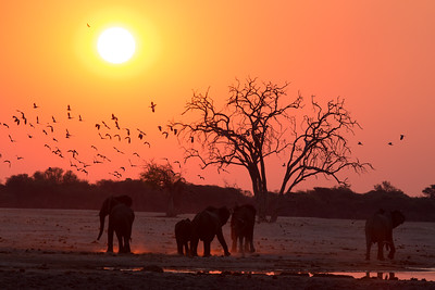 Hwange elephant sunset
