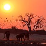 Hwange elephant sunset