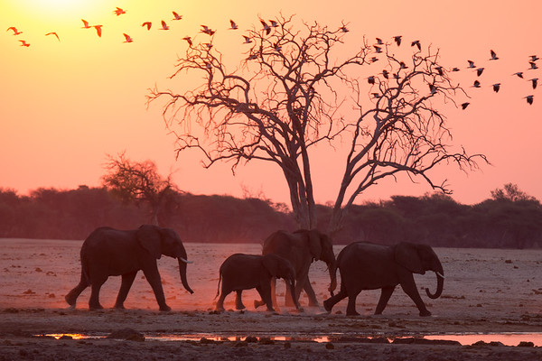 Zimbabwe II