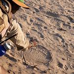 Elephant tracks, Hwange