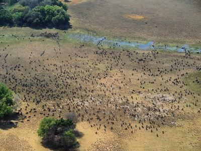 Flying over Okavango Delta