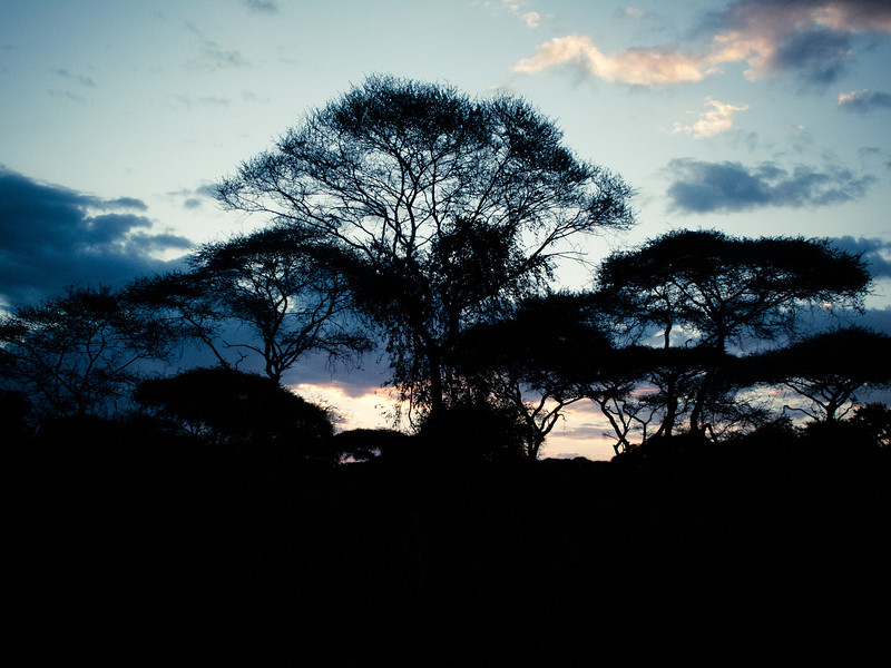 'Deadly Sunset' - The sky, the trees, the evening light combine to make it a deadly sunset.